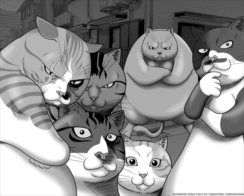 street-fighting-cat-chat